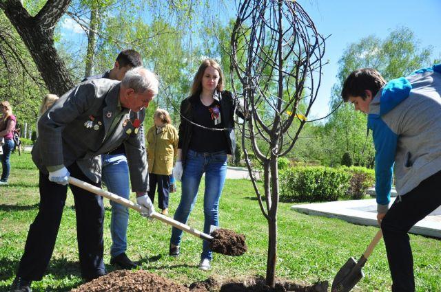 Посадка новых деревьев улучшает экологическую ситуацию в городе.