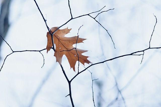 Погода в Украине: аномальное потепление без дождей