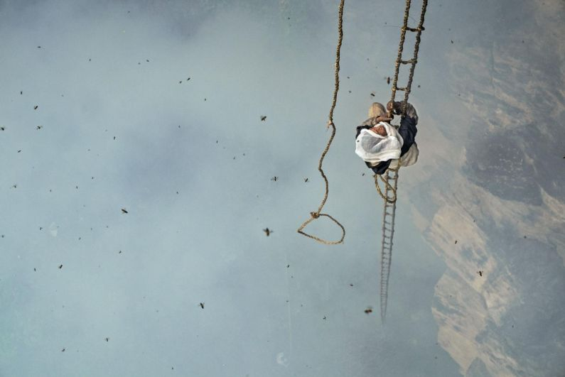 Непалец Маули Дхан собирает мед на высоте 90 метров. Дым от тлеющей травы дезориентирует пчел, и возможно, уменьшает количество укусов, которые получает Моули.