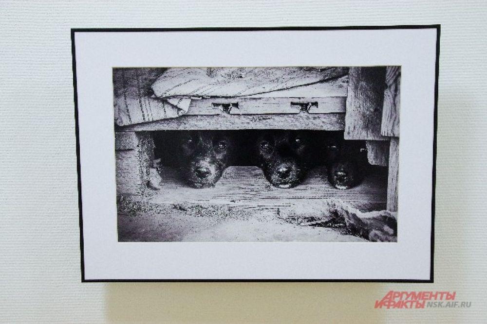 Международное жюри проекта - это фотографы, редакторы, деятели культуры.