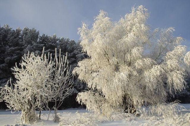 Вначале рабочей недели вНовосибирске предполагается похолодание