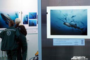 В Калининграде открылась выставка фотографий уникальных мест России.