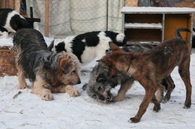 Порядка 200 животных из ветприёмника ищут новый дом.