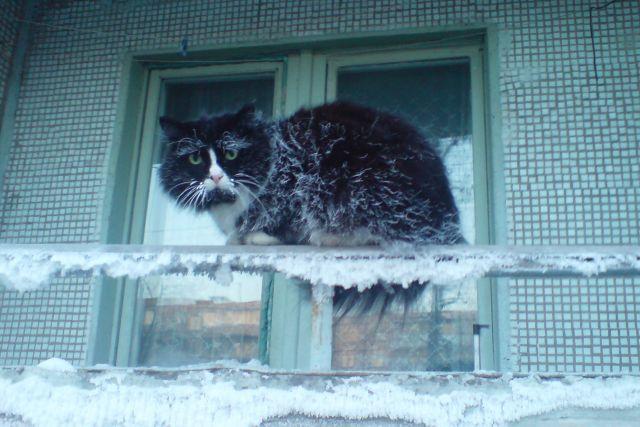 Даже коты в декабре - под стать падению градуса.