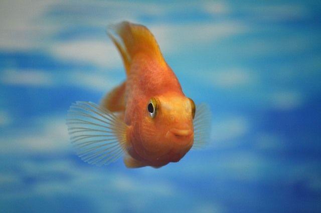 Рыбу изледового городка Копейска планируют убрать