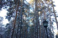 Сибирские леса прекрасны в любое время года.