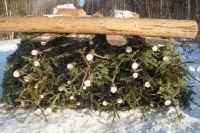 В Омске продолжается незаконная вырубка лесов.