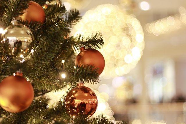 Появился список адресов, где можно бесплатно срубить новогоднюю ёлку