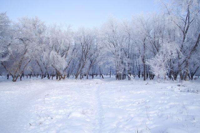 Из-за крепких морозов деревья покрылись инеем.