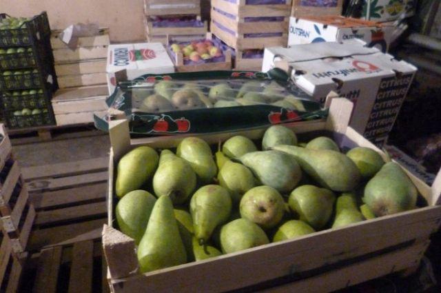 ВОмской области раздавили 200 кило груш