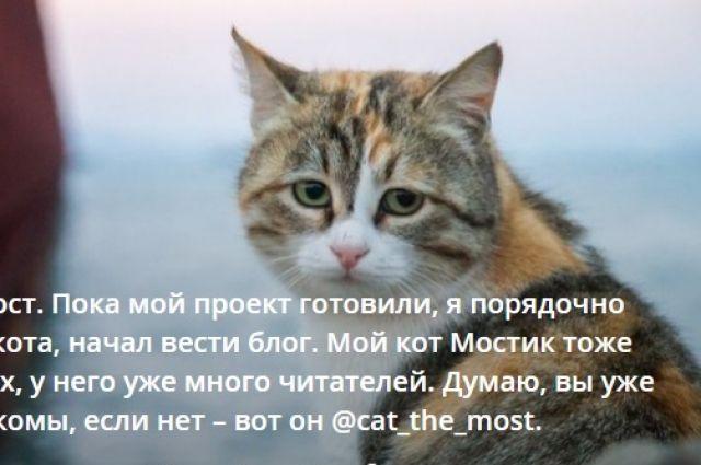 Строители хотят отправить кота пройти через Крымский мост