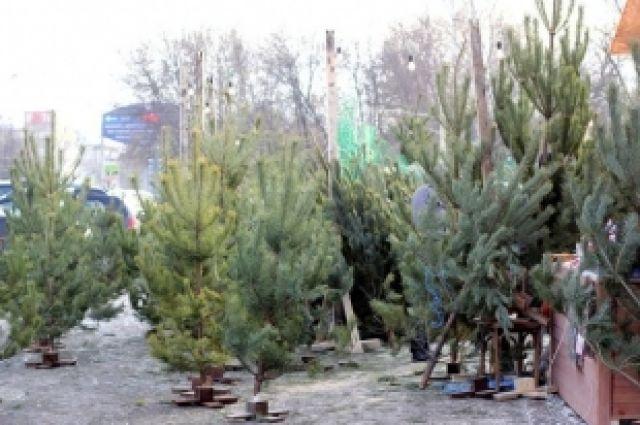 ВУкраинском государстве создали мобильное приложение для проверки легальности новогодних елок