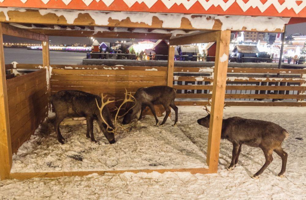 Рядом с деревней эльфом расположен вольер, где находятся четыре живых оленя. Посмотреть на них может любой желающий.