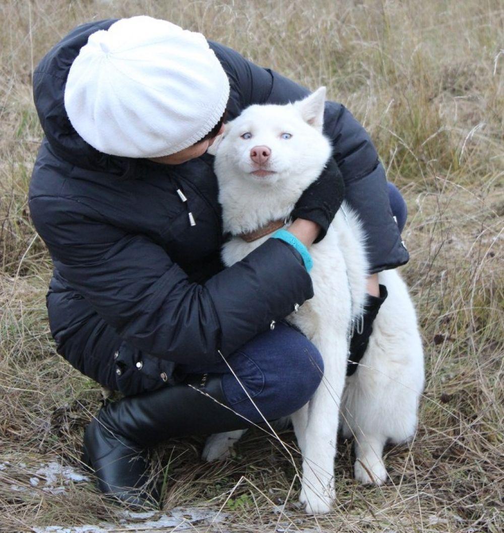 14. Альфина Мулланурова. В августе 2017 года нам подарили беленький комочек, собачку породы Хаски. Назвали мы её Герда, Гердуля-красотуля. Это очень общительная, весёлая, добрая собака. На прогулках она старается познакомиться и поиграть со всеми собачками, которых видит. Каждое утро я ей говорю: «Пойдем кормить курочек».  И Герда уже знает, куда идти. Курочки привыкли к ней и не боятся новой подружки. Так мы с помощницей вместе занимаемся хозяйством.