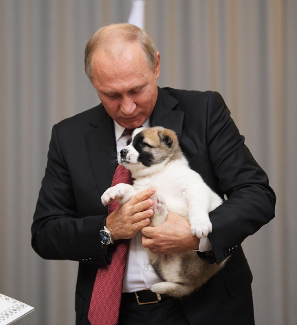 Лидер Туркмении Гурбангулы Бердымухамедов поздравил российского коллегу Владимира Путина с днем рождения и подарил ему щенка алабая. 11 октября 2017 года.