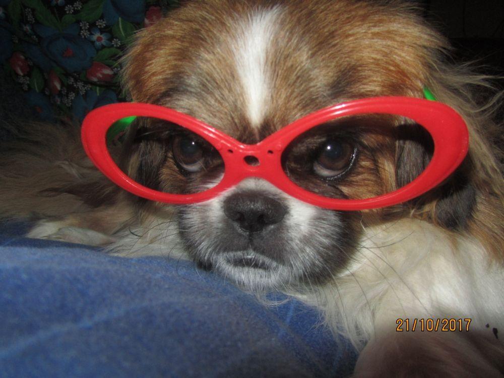 16. Наталья Гаузер. Это наш любимец Джек. Он очень красивый, умный и весёлый. Мы его очень любим.