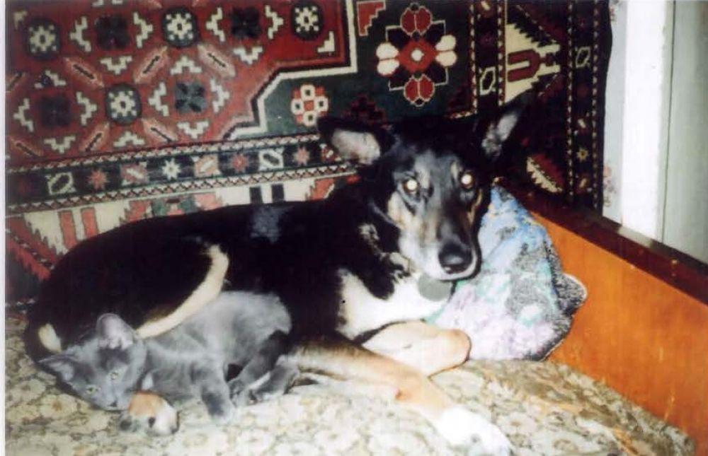 27. Фаина Комиссарова. Это мои найдёныши: собака Кэти и котёнок Дымка.