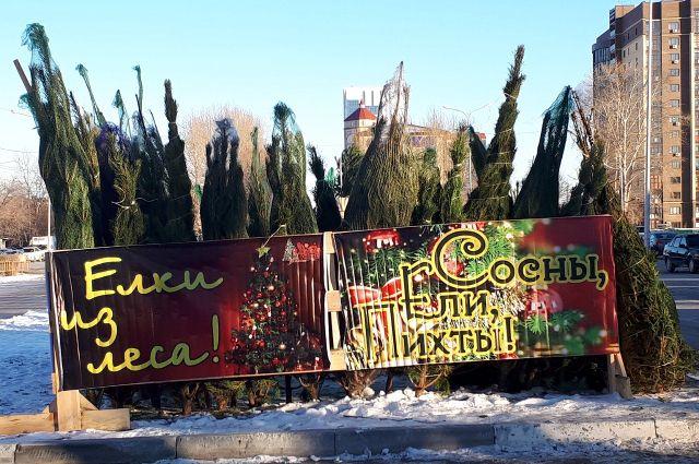В Тюмени новогодние елки можно купить возле ТРЦ