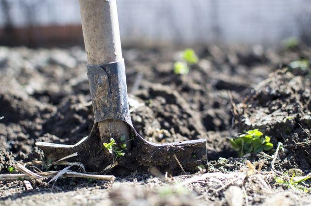 Чтобы скрыть следы преступления, мужчина закопал тело недалеко от дома.