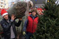 Ёлочные базары уже во всю работают на улицах многих городов России