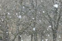 Омичей предупредили о снегопаде.