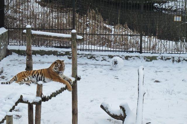 В новогодние праздники калининградский зоопарк будет работать без выходных.