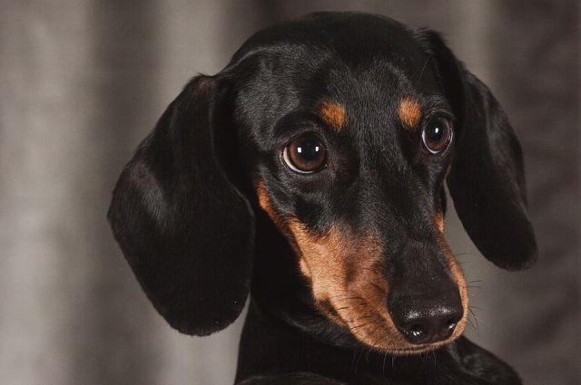 Собчак заявит наРогозина впрокуратуру после «утопления» собаки