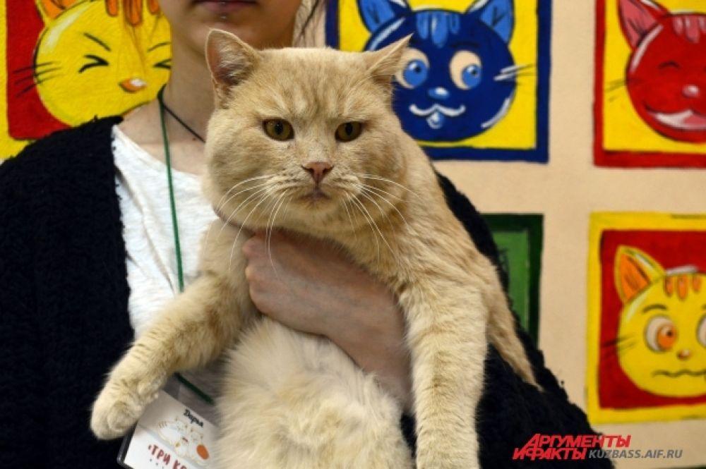 Сейчас в небольшом котокафе постоянно живут восемь животных – два кота и шесть кошек.
