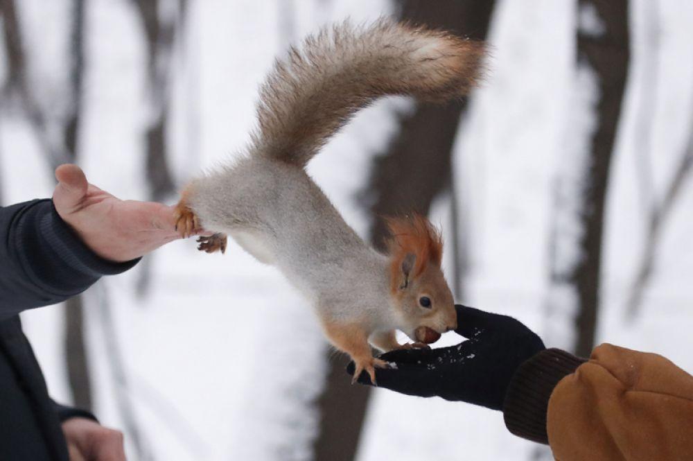 Белка ест орехи из рук посетителей одного из паркой Москвы. 19 декабря 2017 года.