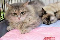 Цель акции - спасти приют «Матроскин» от выселения и построить новый большой приют для кошек.