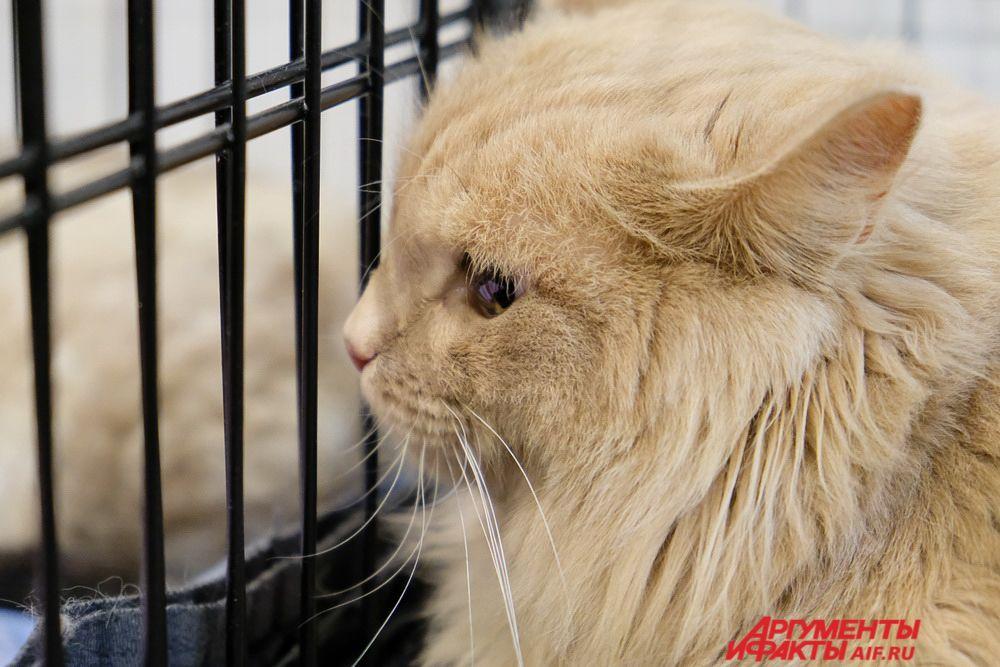 На выставке были коты и кошки разного возраста и породы.