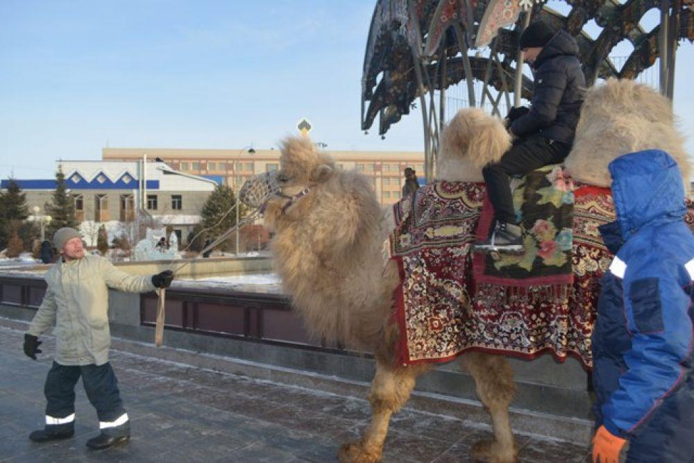 Было много желающик прокатиться на верблюде