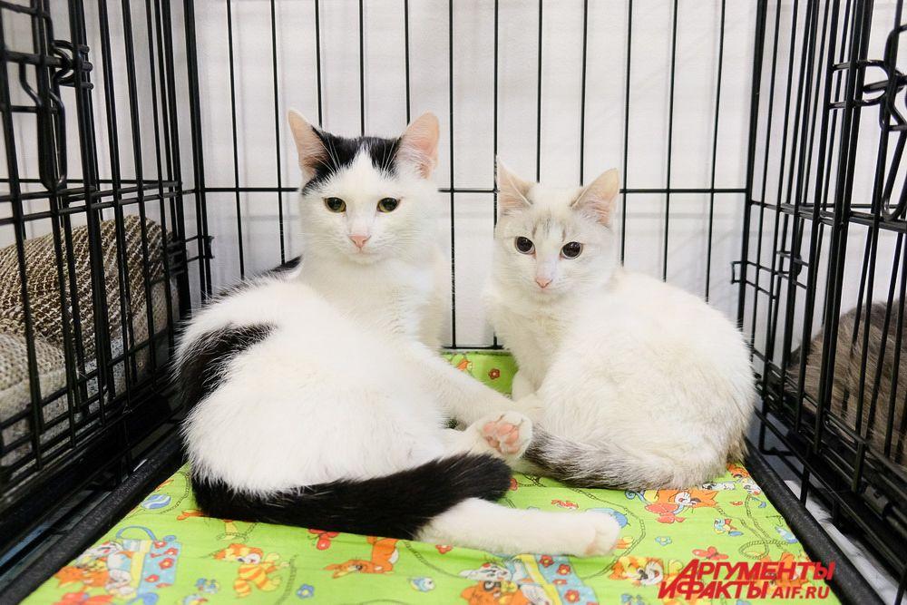 На «Новогоднем котофесте» прошла выставка котов и кошек.