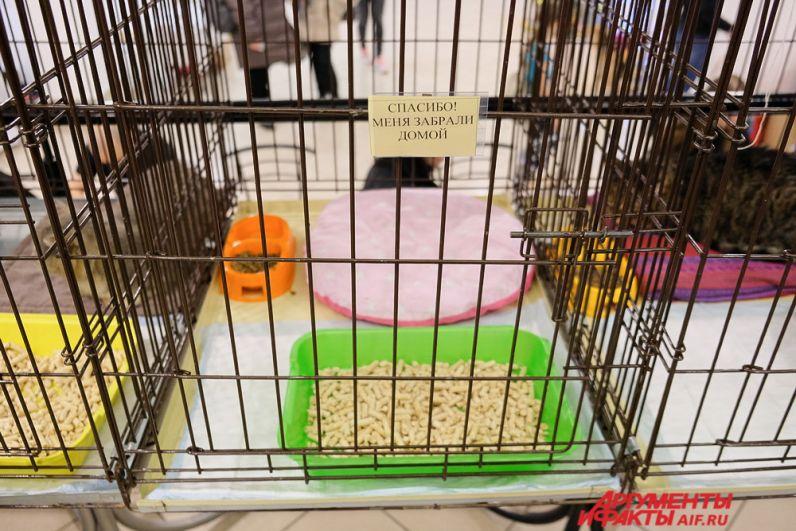 Благодаря «Новогоднему котофесту» некоторые животные обрели новый дом.