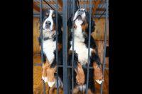 Корм передают в приют для животных.
