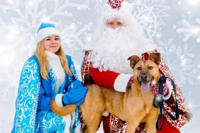 ВЯрославле нановогодней ярмарке раздадут собак