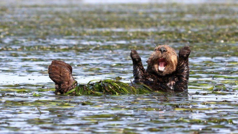 Фотоконкурс обращает внимание на проблему браконьерства и вымирания разных видов животных.