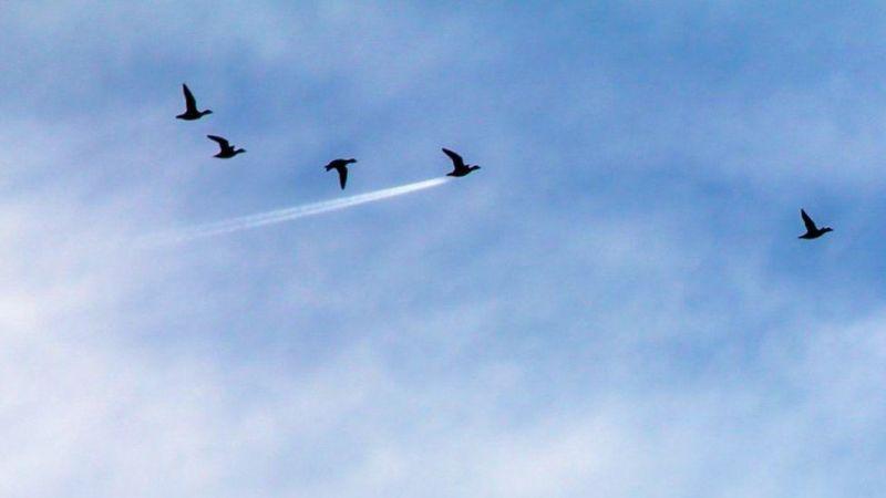 В категории В воздухе победила птица-ракета шотландского фотографа Джона Трелфолла.