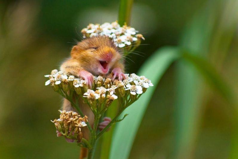 В категории На земле победу одержал итальянский фотограф Андреа Зампати, снявший полевую мышь на цветке.