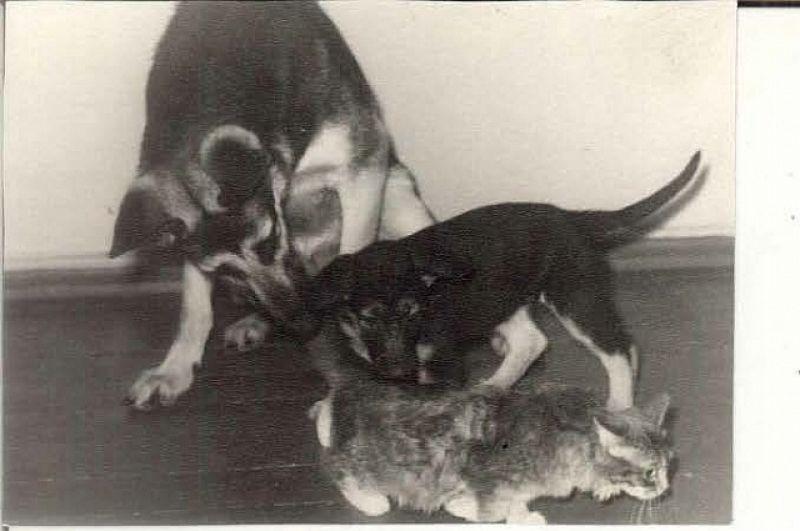 31. Галина Михайлова. Собака Хильда, её щенок и кошка Пышка, которую она выкормила.