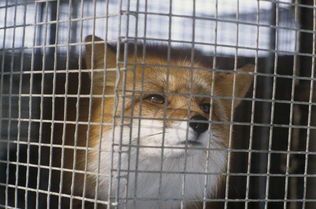 Сенаторы отклонили проект Володина озапрете натравливать охотничьих собак наживотных