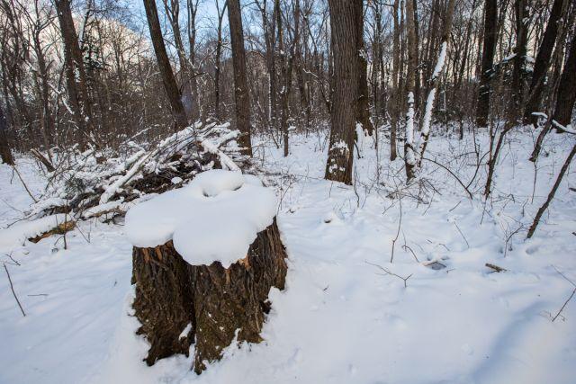 Пеньками могут стать лесные долины.