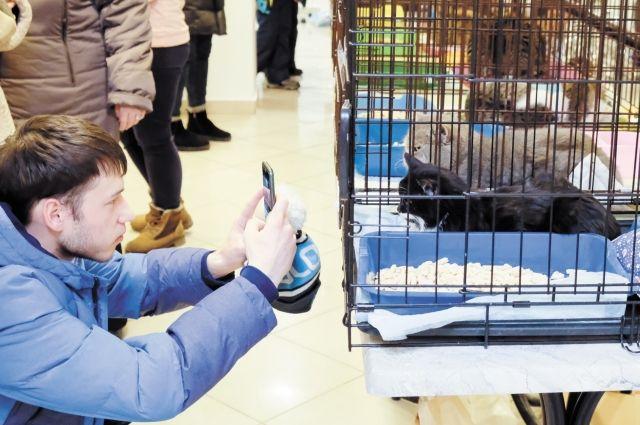 На новогоднем «Котофесте» пермяки пожертвовали на приют для кошек 80 тыс. руб.