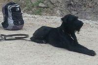 Собаки не раз помогали волонтерам в поисках пропавшего.