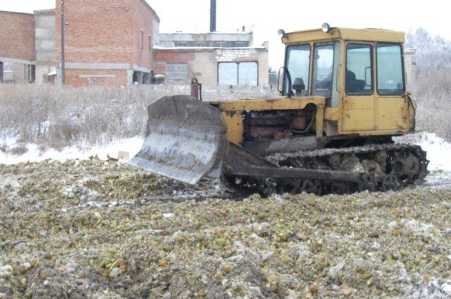 36 тонн груш раздавили бульдозером наЮжном Урале
