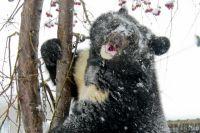 Медведь Жора.