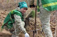 Сотрудники Центра защиты леса наблюдают за здоровьем деревьев на протяжении всей их жизни.
