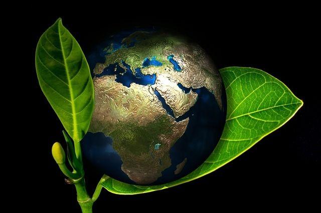 В России появится новый фестиваль экологических фильмов и телепрограмм.