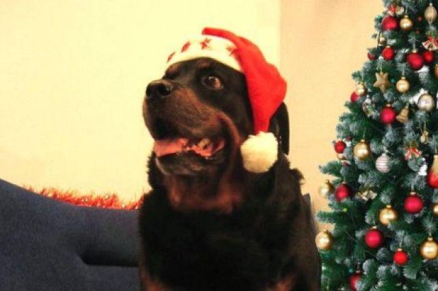 Жюри подвело итоги конкурса «Новогодний пёс».