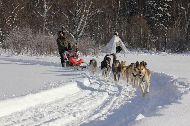 В Тюмени пройдут гонки на собачьих упряжках
